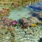noumea nouvelle caledonie charter catamaran dal ocean ile des pins piscine naturelle